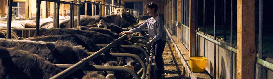 Versicherung Vorsorge Landwirtschaft